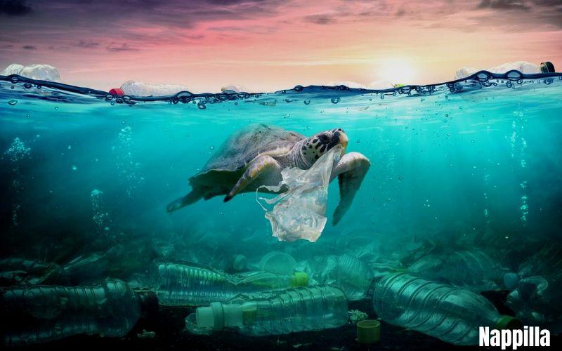 Du plastique dans nos océans !! - Nappilla Luxembourg
