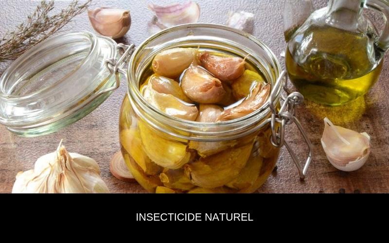 Comment faire son insecticide corporel bio ? Nappilla
