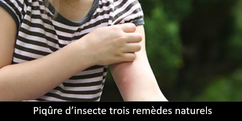 Piqûre d'insecte trois remèdes naturels