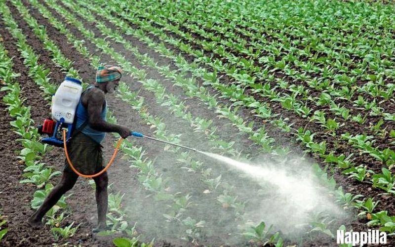 La culture du coton encore un désastre écologique - Nappilla
