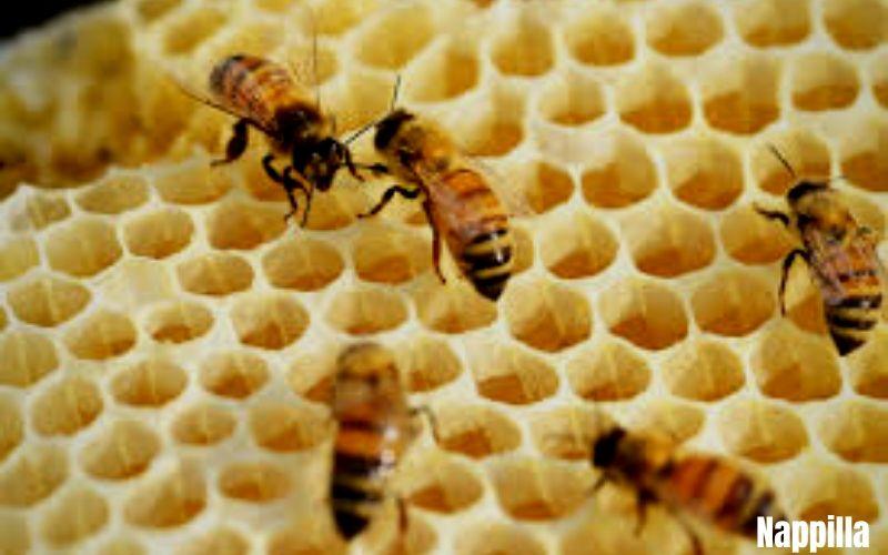Les multiples utilisations de la cire d'abeille - Nappilla