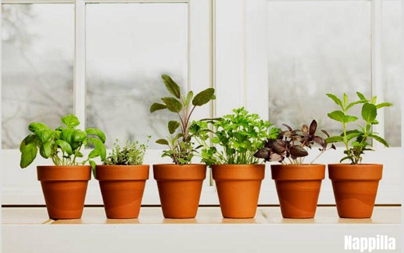 Comment bien démarrer un potager bio, commencez par cultiver en pot - Nappilla Blog Luxembourg