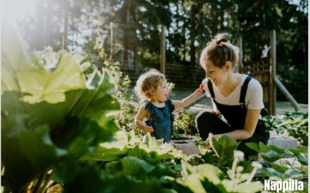 cultive ton propre potager bio c'est la solution pour manger de bons légumes bio Nappilla luxembourg - Blog zéro déchet