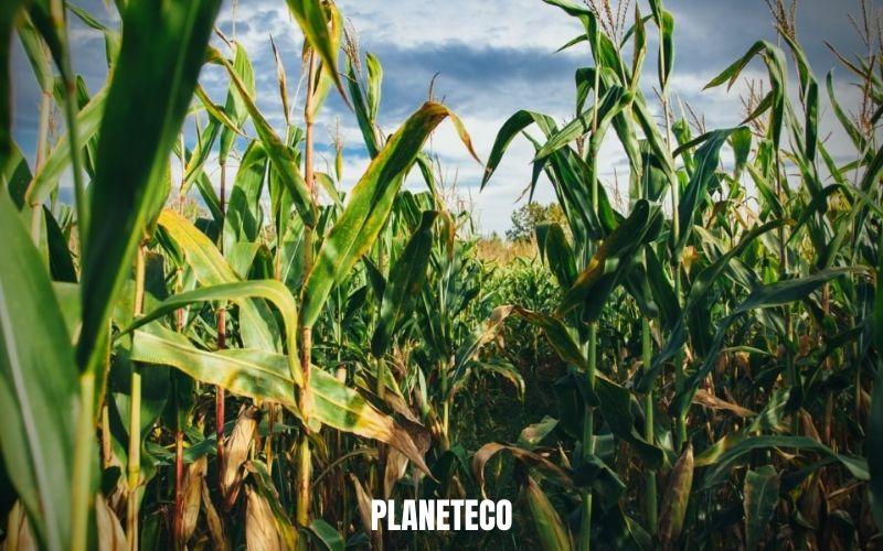 Qu'est-ce qui ne va pas avec les biocarburants ?